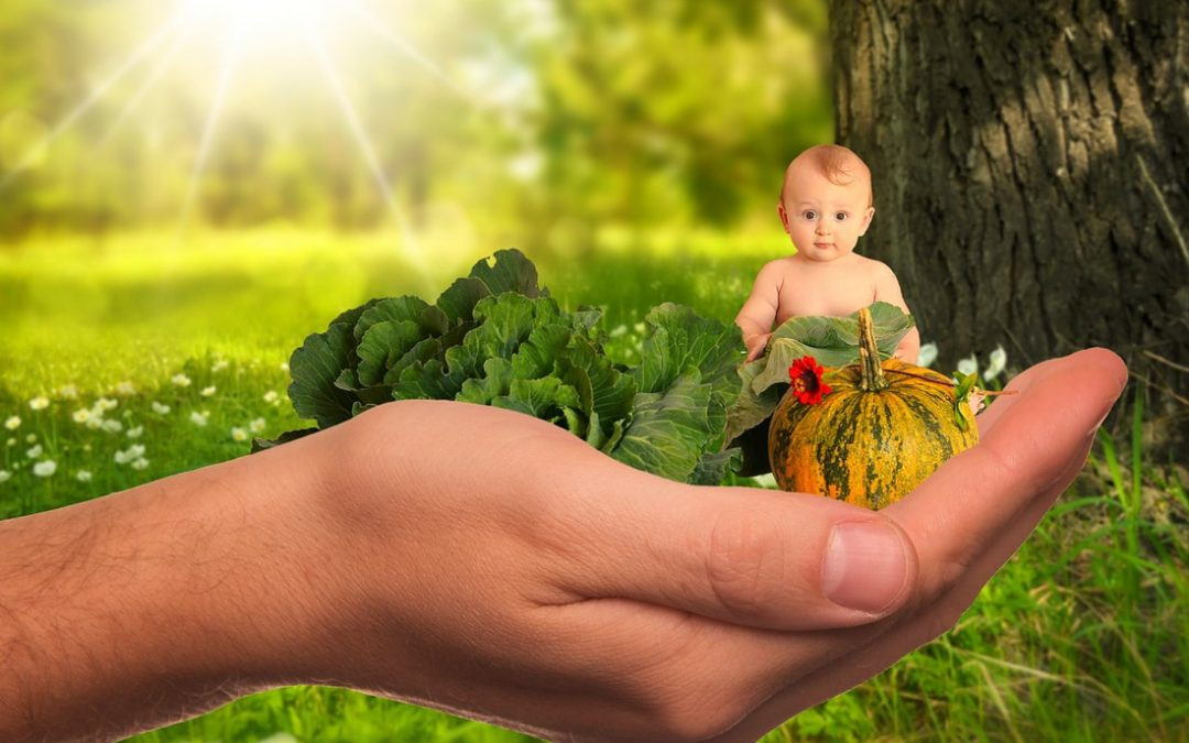5 Tips for Nutritional Support during IVF